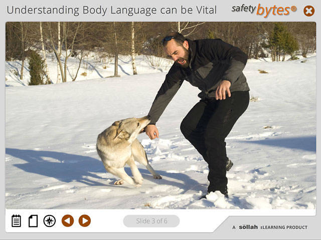 SafetyBytes® - Understanding a Dog's Body Language